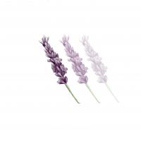 Sophie Lavender - profile image